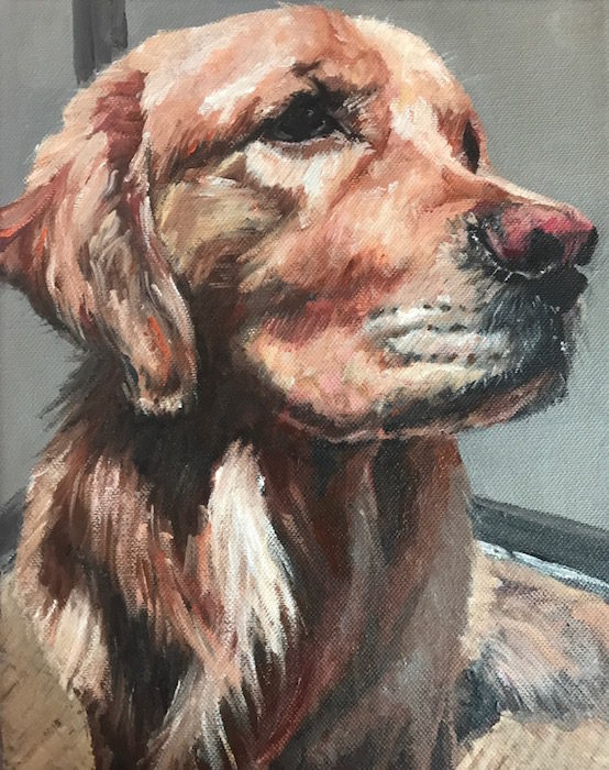 Hundeportrait Golden Retriever Mick